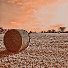 Norfolk Summer Fields UK by Mark Snelling