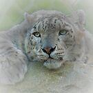 Snow Leopard by Foxfire