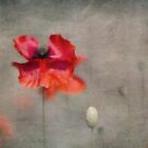 Red Poppies by Priska Wettstein
