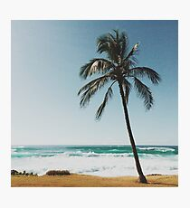 Palm Tree By The Beach  Photographic Print