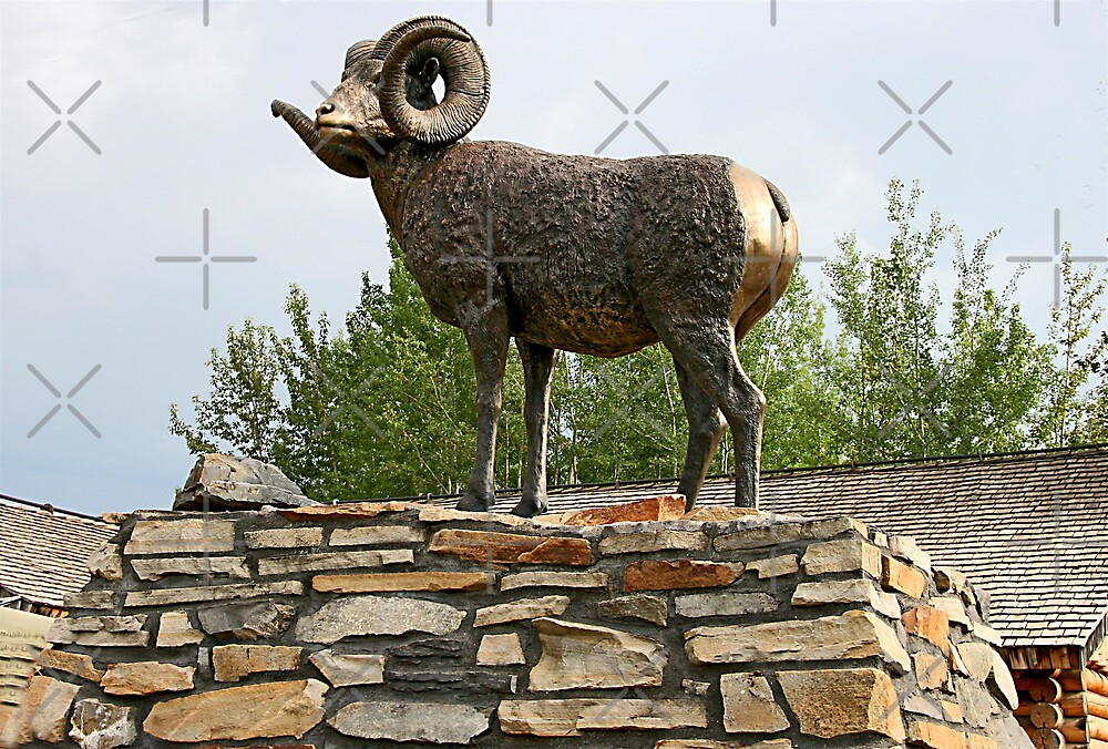 Fort Nelson's Chadwick Ram by Vickie Emms