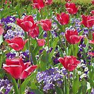 tulips day by ANNABEL   S. ALENTON
