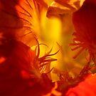 Orange nasturtium flower - 2018 by Gwenn Seemel