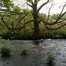 River Fowey near Respryn Bridge by daretoblossom