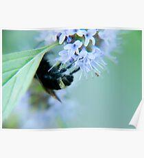 slumber sweetly softly buzzing Poster