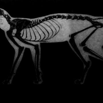 Skeleton Cat by ballantynero