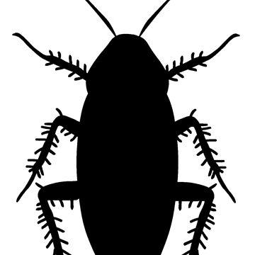Cockroach by sweetsixty