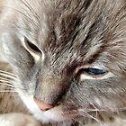 Sleepy Cat by Carol Bleasdale