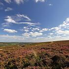 Autumn Heather and Blue Sky on the Yorkshire Moors by Ryan McGurl
