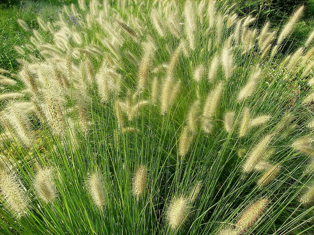 Greensward grass by Ana Belaj