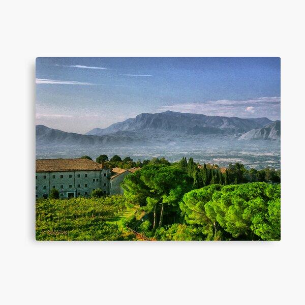 Vineyard in Monte Cassino Canvas Print