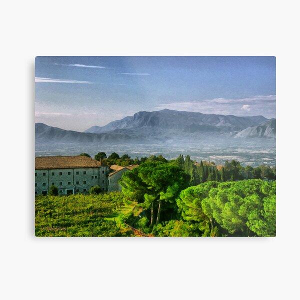 Vineyard in Monte Cassino Metal Print