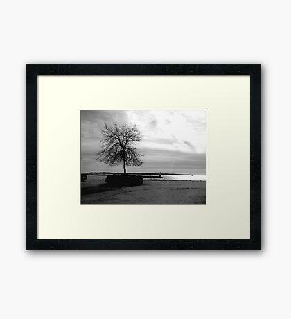 Tree At Garry Point Framed Print
