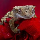 Happy Crested gecko on red flower by FrogtographerUK