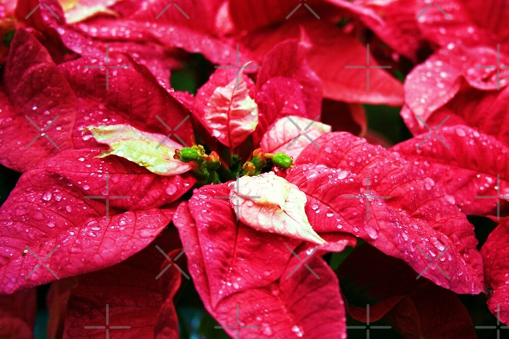Have A Blessed Christmas by Julie's Camera Creations <><