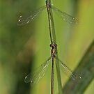 2 Willow Emeralds by Robert Abraham