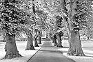 Park IR by James Coard