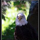 EAGLE EYES by BOLLA67