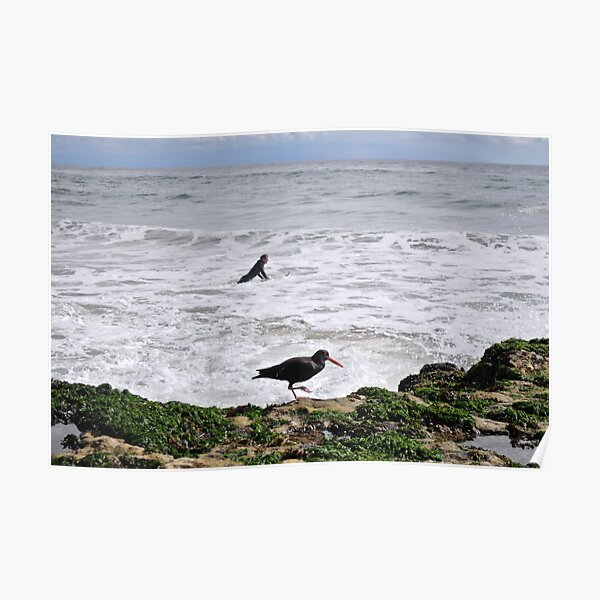 Surf bird Poster