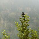 BLACK BIRD by A P Singh