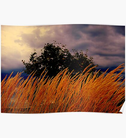 Grasses  Blowing In the wind  Poster