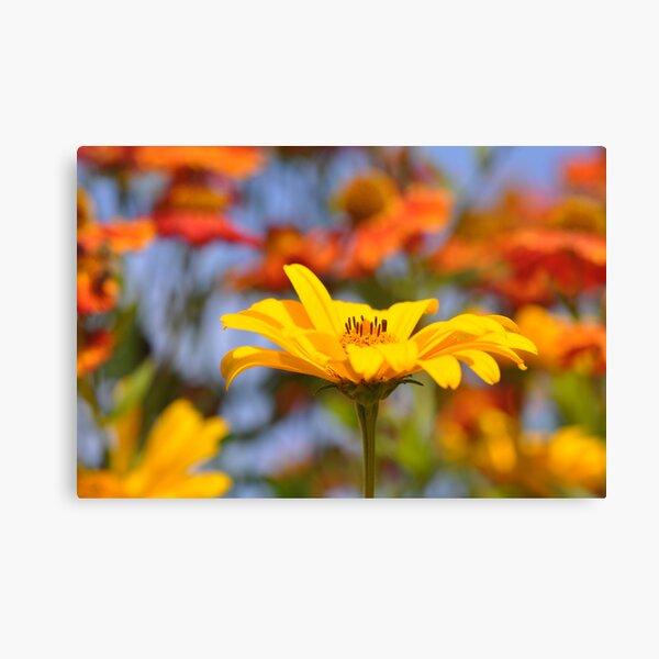 Orange & Yellow Canvas Print
