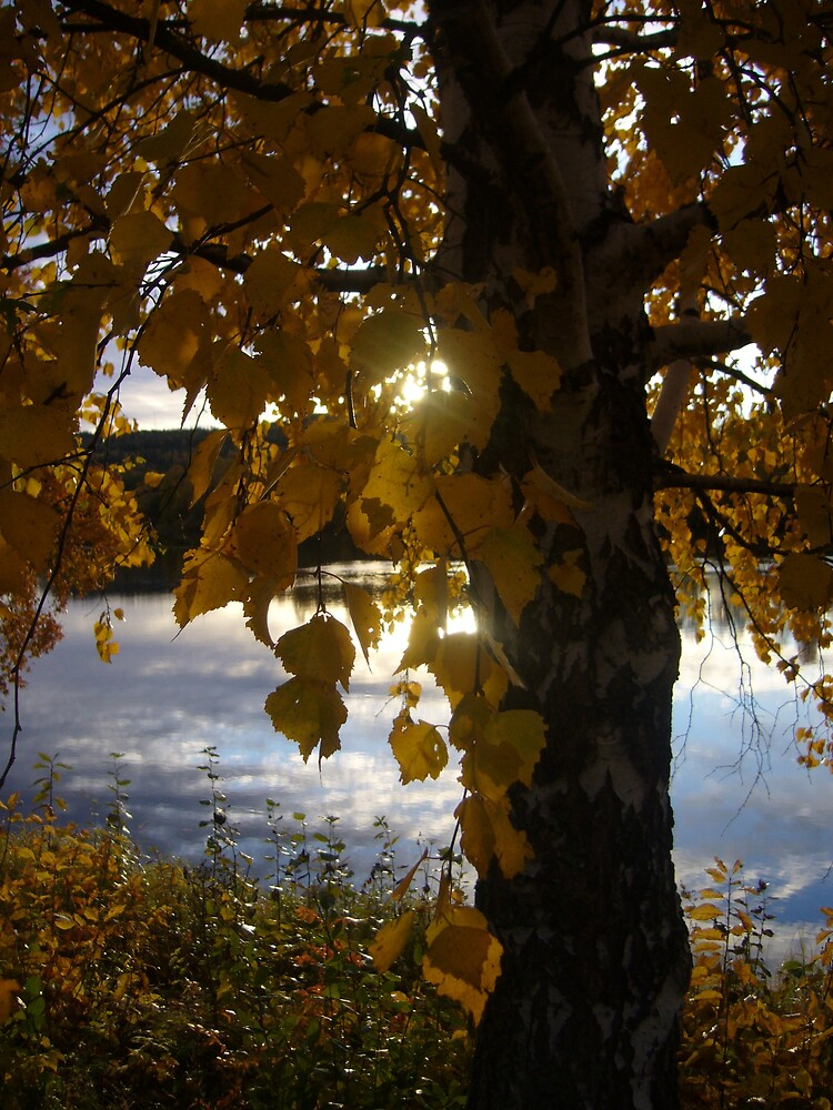 Autumn Birch by miravisu