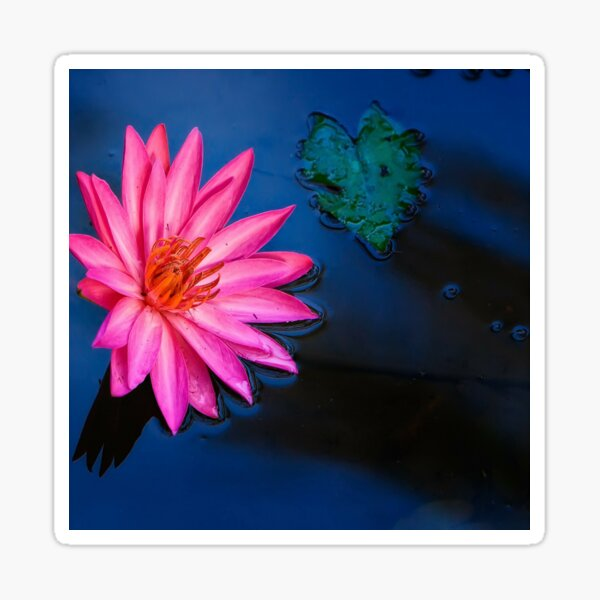Water Lily with Depth Sticker