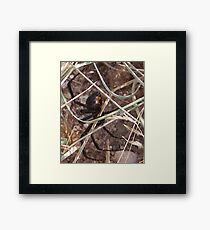 NO BARE FEET!!!!! Framed Print