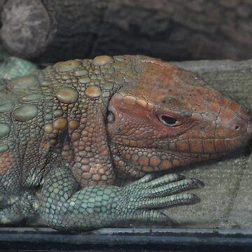 Northern Caiman Lizard by venny