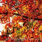 Favorite Fall Feelings by Bryan W. Cole