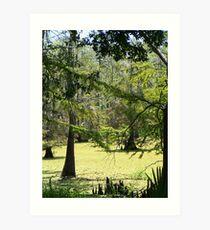 Swamp View Art Print