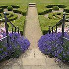 Lavendelstufen von marxbrothers