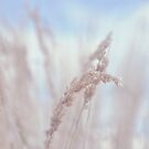 ~Blowing Like A Wind~ by Janitka