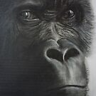 The Stare by Paul Horton