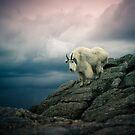 Mountain Goat by jscherr