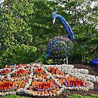 Peacock in the Garden by hummingbirds
