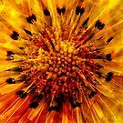 Making Flowers by Jordan Duff