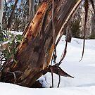 Snowed in by MagnusAgren