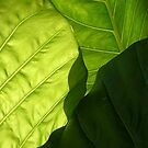 Green Leaves by Eve Parry