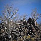 White Trees on Black Rocks by Saka