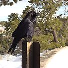 Bird on a Post at the Grand Canyon by Susan Russell