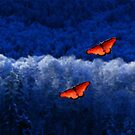 Winter butterflies by RobertLuxford