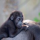 Baby Gorilla by Peter Pevy
