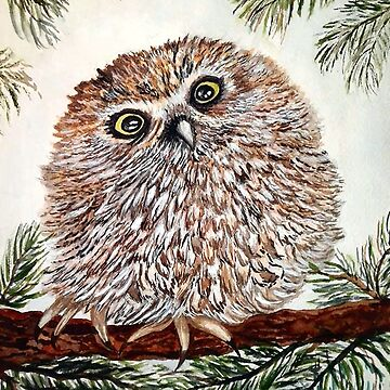 Baby Pygmy Owl Print by Lallinda