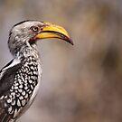 Yellow Billed Hornbill by Steve Bullock