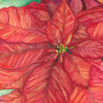 Red Christmas Poinsettia Print by Lallinda