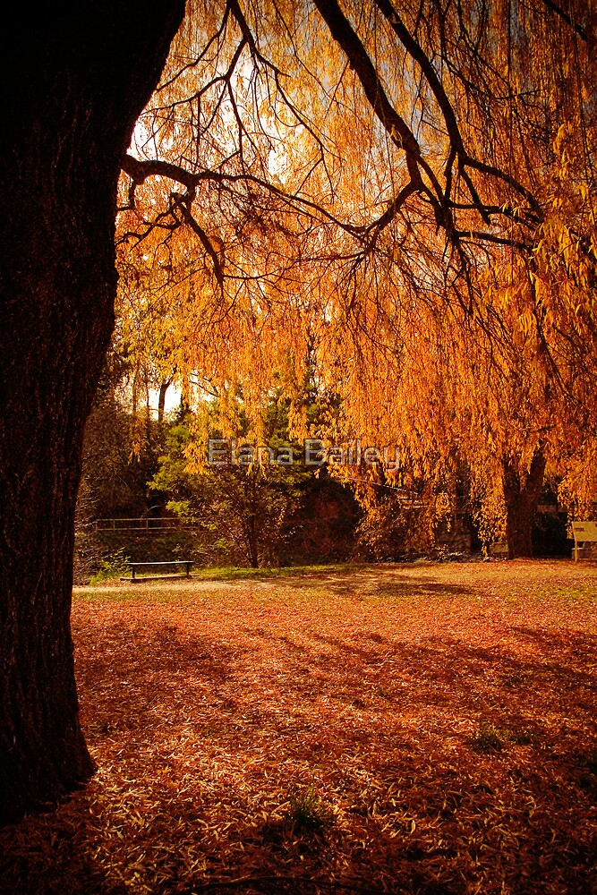 Autumn leaves in Bright by Elana Bailey