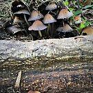Mushroom Town by Brita Lee