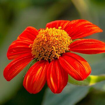 Flowering Flower by JoeGeraci